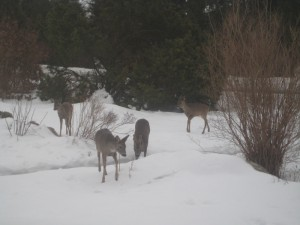 Four deer in the garden